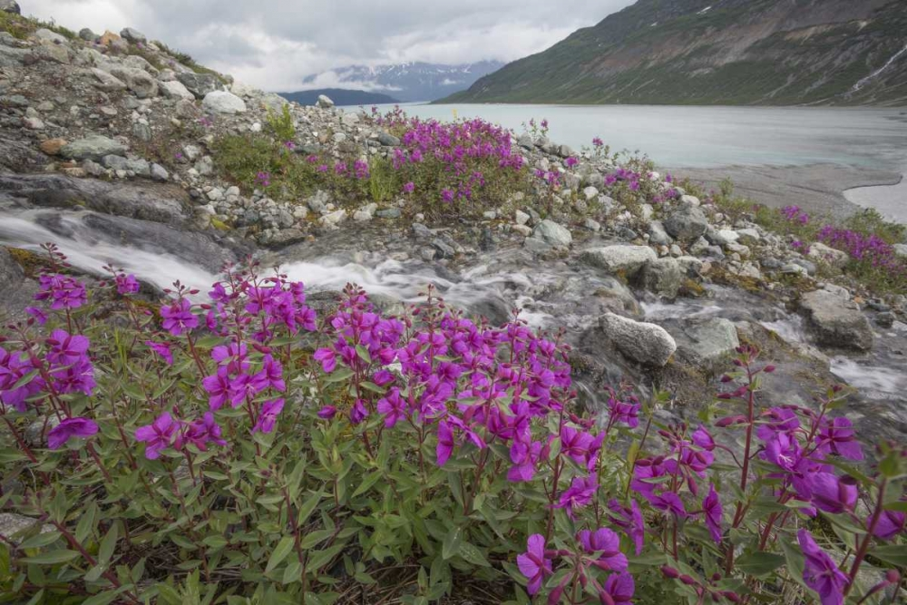 STAMPA-SU-TELA-Alaska-Glacier-Bay-NP-piccolo-corso-d-039-acqua-a-cascata