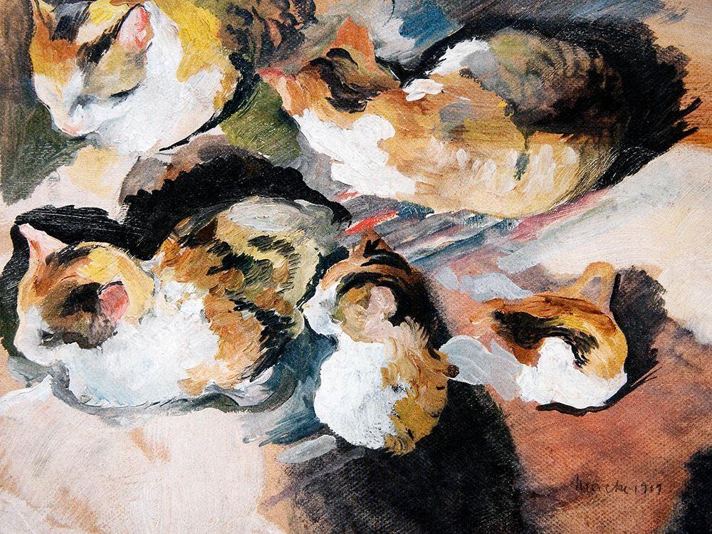 Katzenstudien Study of a Cat