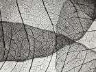 Leaf Designs II BW