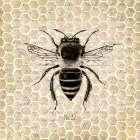 Honeycomb No 32