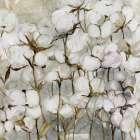 Cotton Field - Carol Robinson