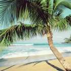 Napii Beach