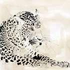 Leopard Spots I