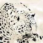 Leopard Spots IV - Carol Robinson