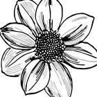 Floral Outlines I