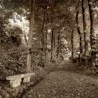 Fiesole Giardini - 2