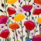 Bursting Poppies