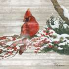 Winter Red Bird on Wood I - Tiffany Hakimipour
