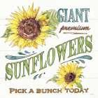Sunflower Fields IV - Anne Tavoletti