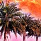 Hifi Palms I - Skip Nall
