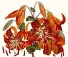 Striking Coral Botanicals II -  Curtis