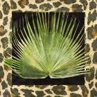 Tropic Collection III
