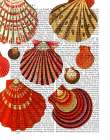 Red Clam Shells
