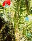 Tropics - Ashley Singleton