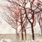 Rusty Trees II