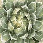 Succulent Verde III