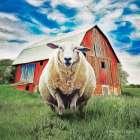 Sunday Afternoon Sheep Pose   -  Bluebird Barn