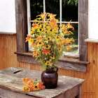 Wildflower Window - Irvin Hoover
