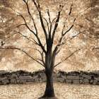 Gold Canopy Tree - Lori Deiter