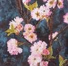 Cherry Blossoms - Sheila Elsea