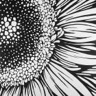 Gerbera Flower Outline Style