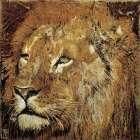 Portrait de lion - Fabienne Arietti