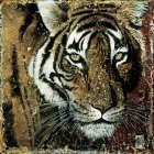 Portrait de tigre - Fabienne Arietti