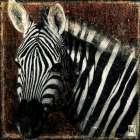 Portrait de zebre - Fabienne Arietti