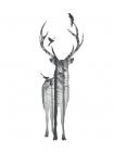Deer with birds -  Braun Studio