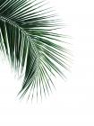 Green Palm Tree I -  Braun Studio