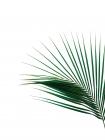Green Palm Tree II -  Braun Studio