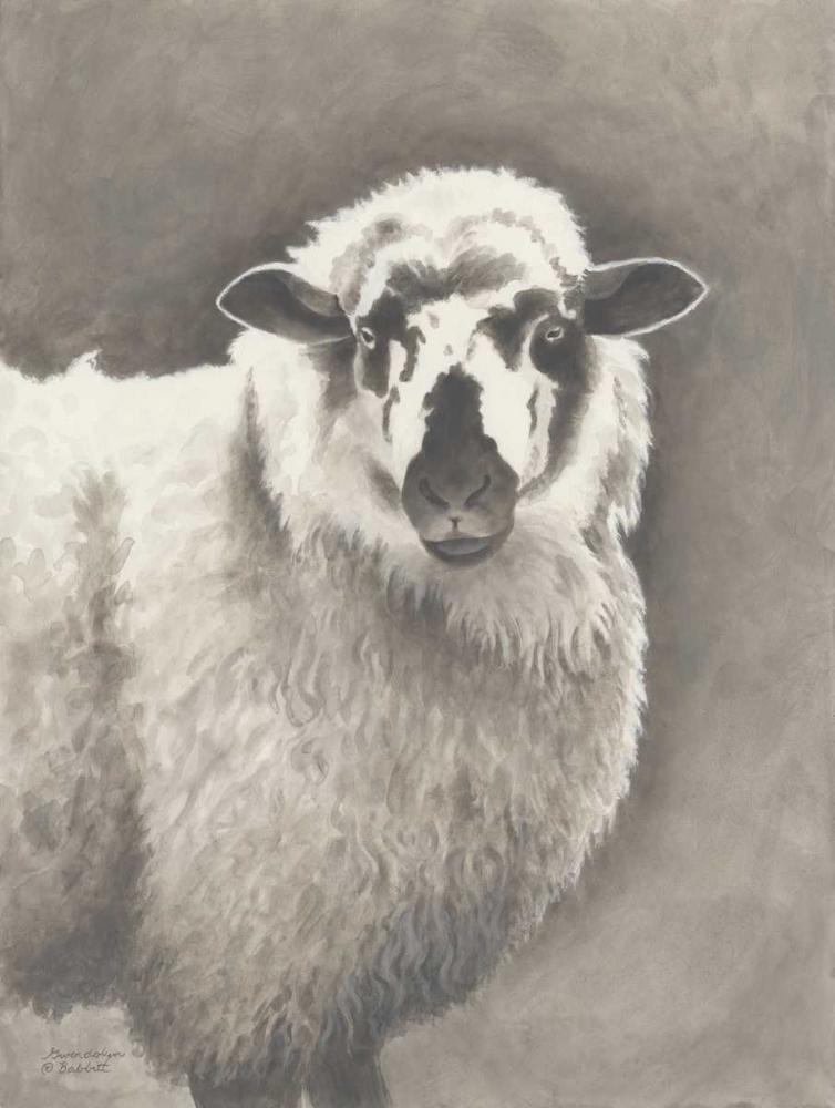 Heirloom Madras Sheep