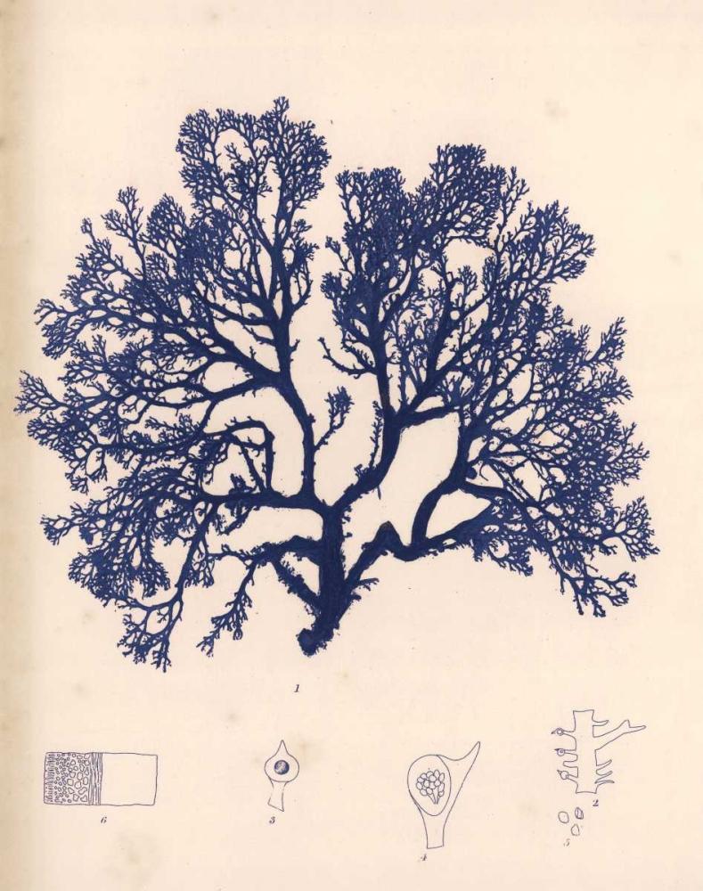 Blue Botanical Study I