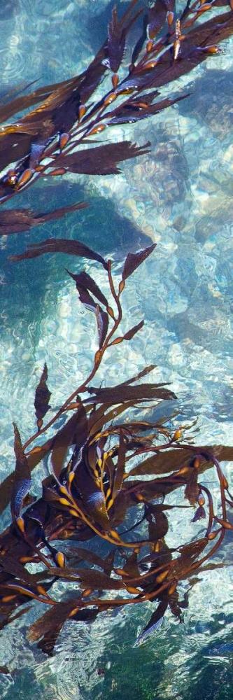 Mermaid Tresses VI