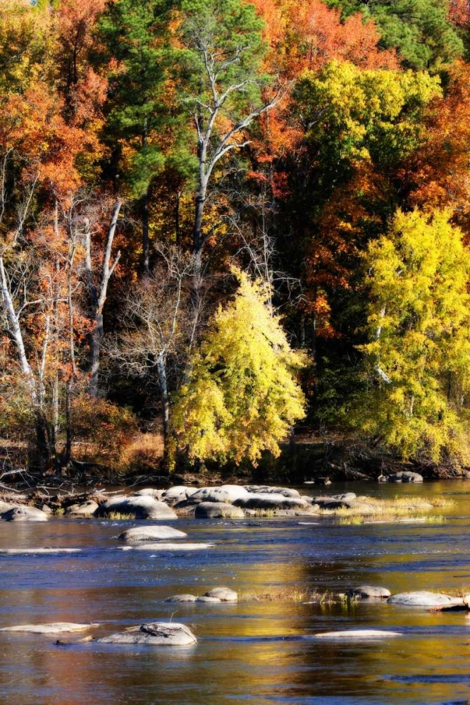Autumn on the River IX