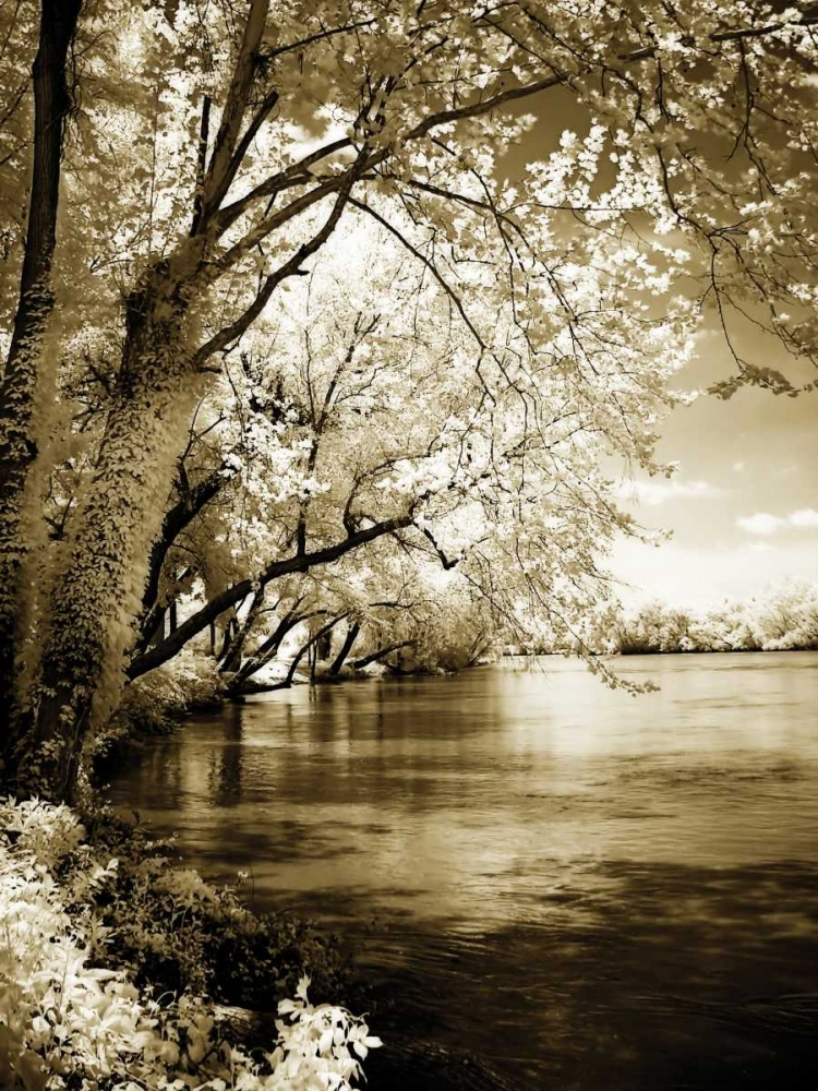 Spring on the River I