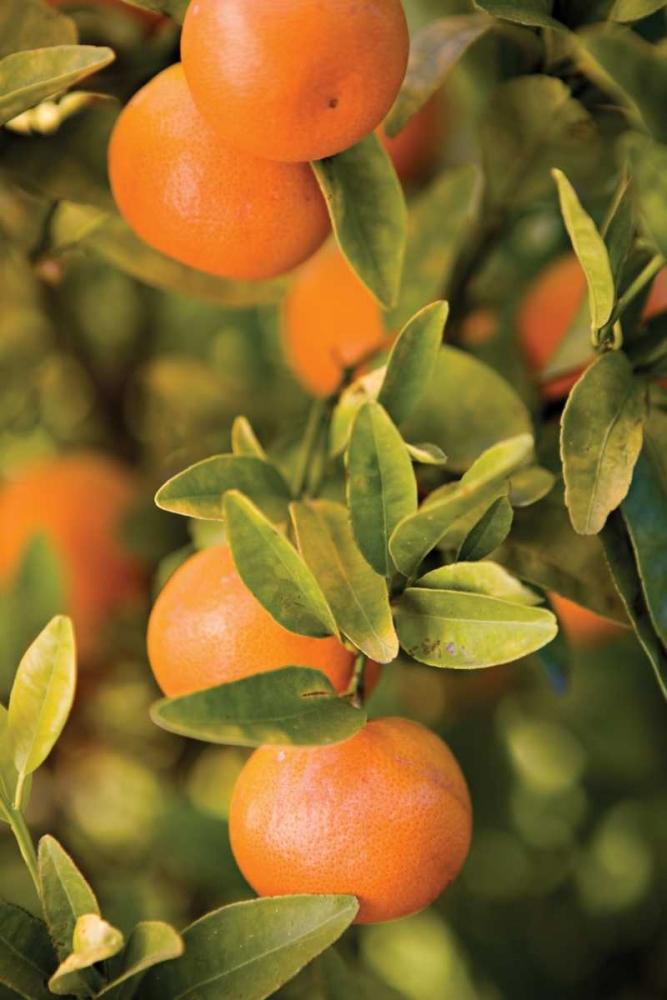 OrangesII