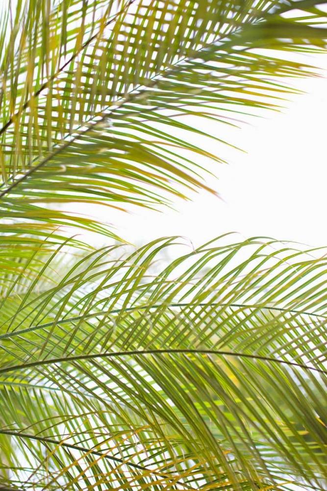 Palms in the Sun I