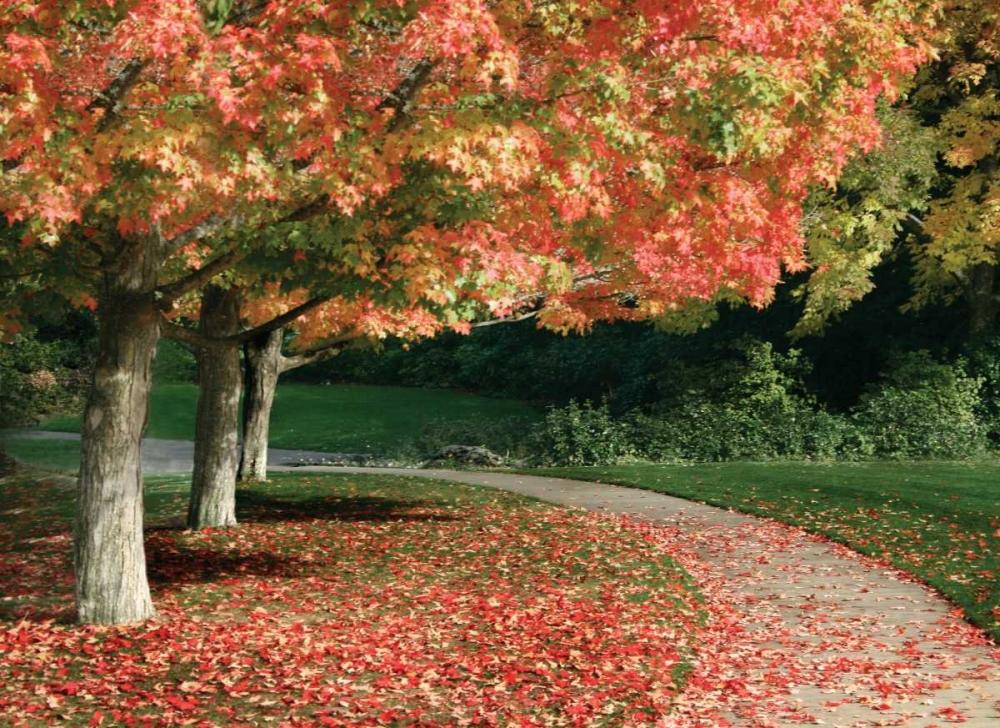 Fall Maple Fever IV