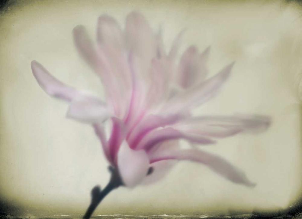 Floral Dreams I