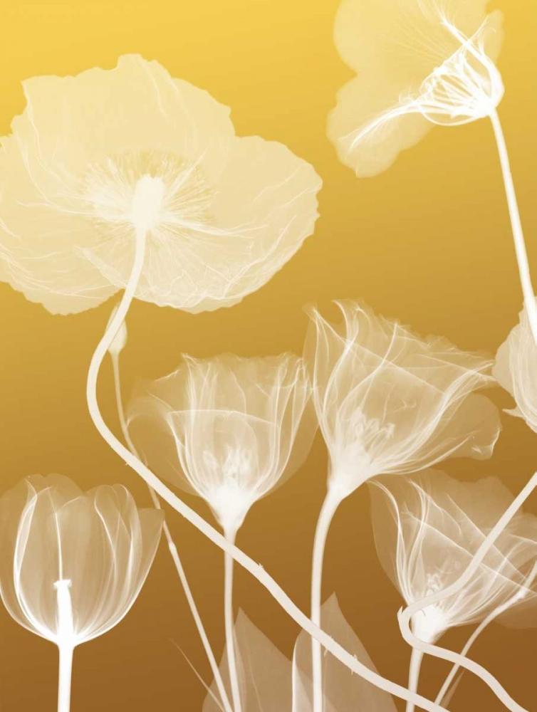 Transparent Flora 1