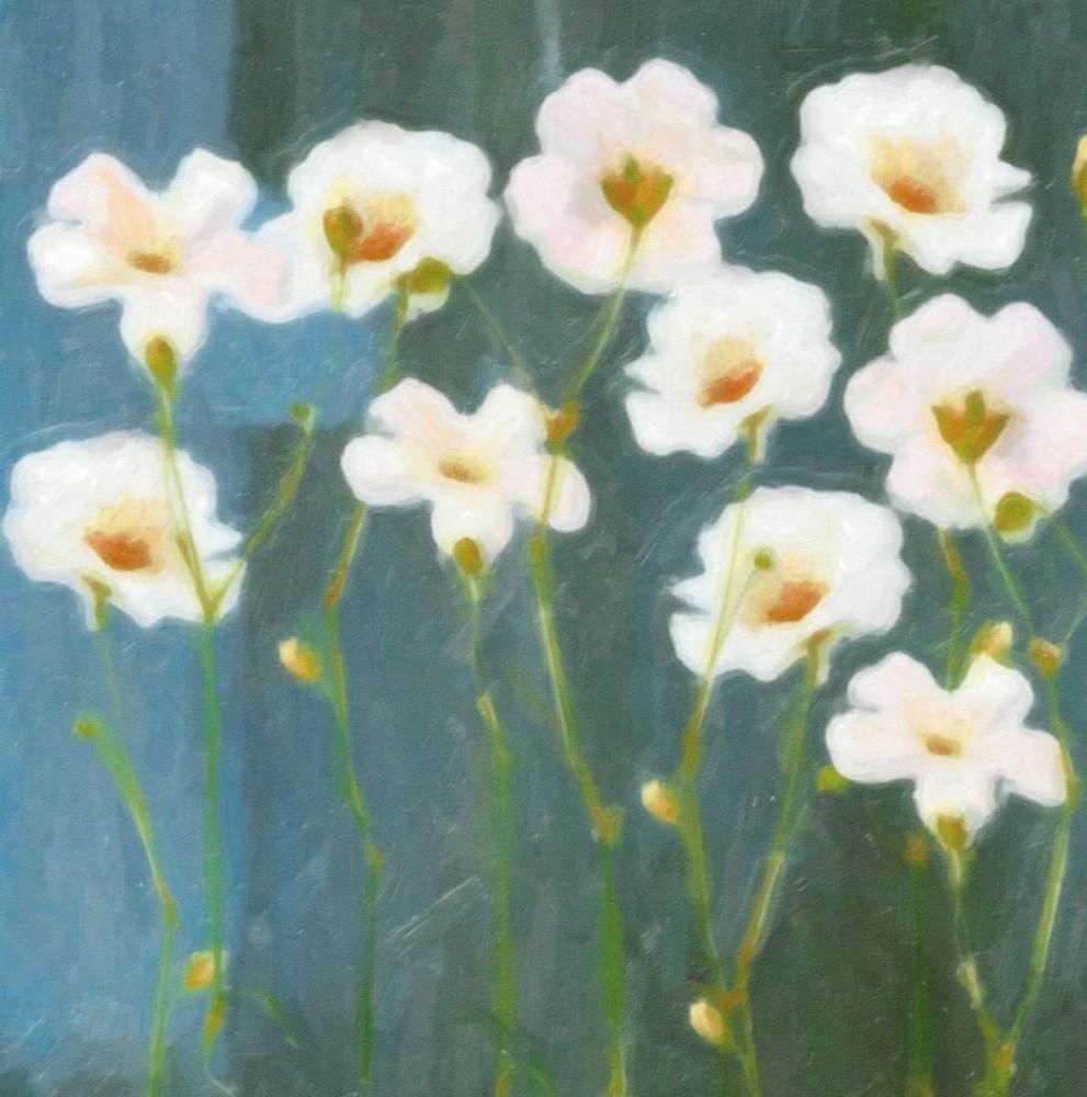 WHITE FLOWER FIELD I
