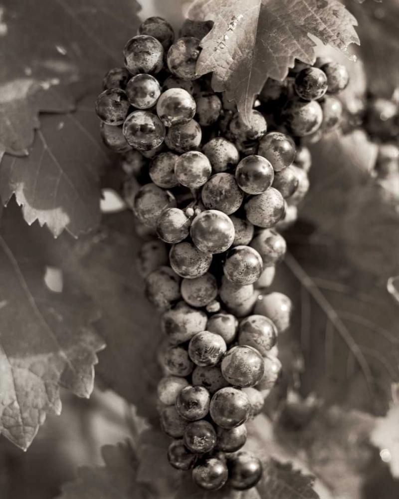 Grapes - 23