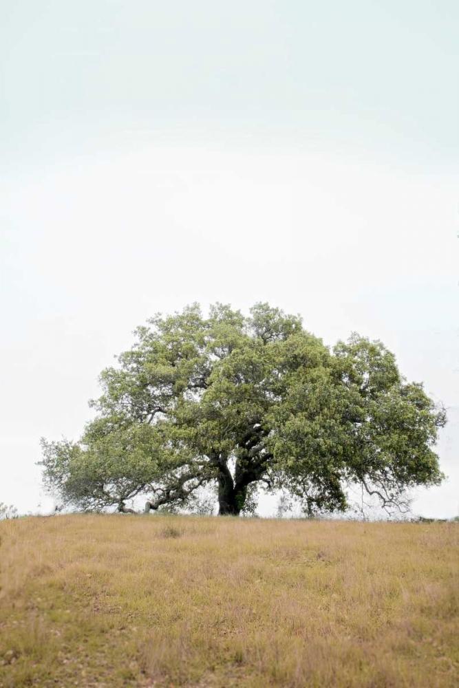 Oak Tree - 73