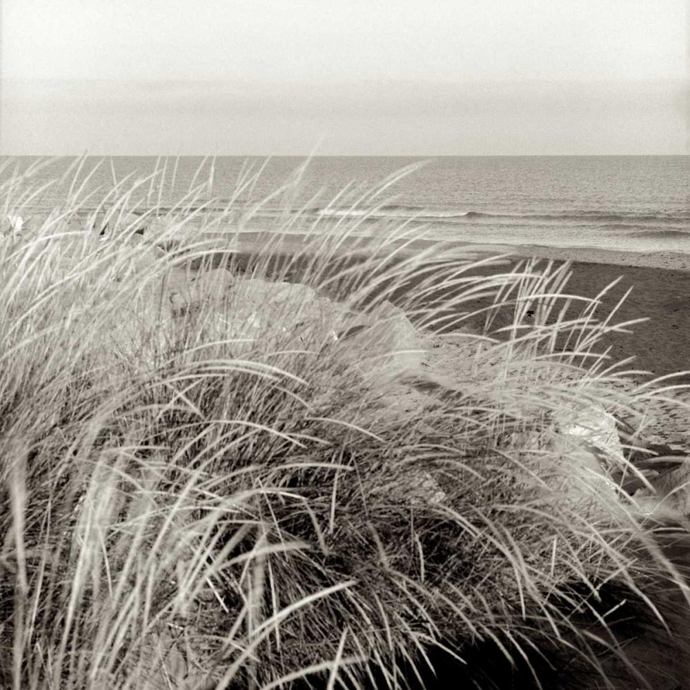 Tuscan Coast Dunes - 3
