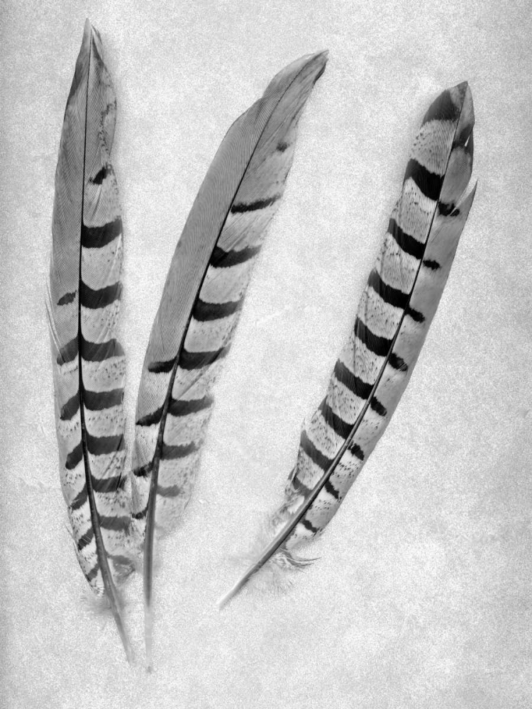 Feathers B-W - 1