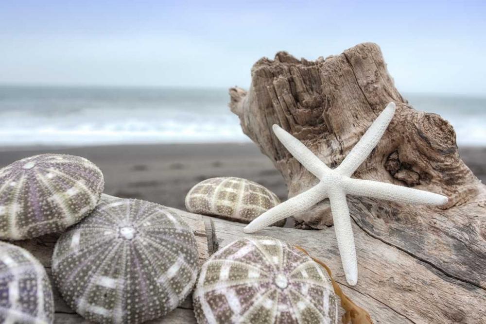 Crescent Beach Shells 5
