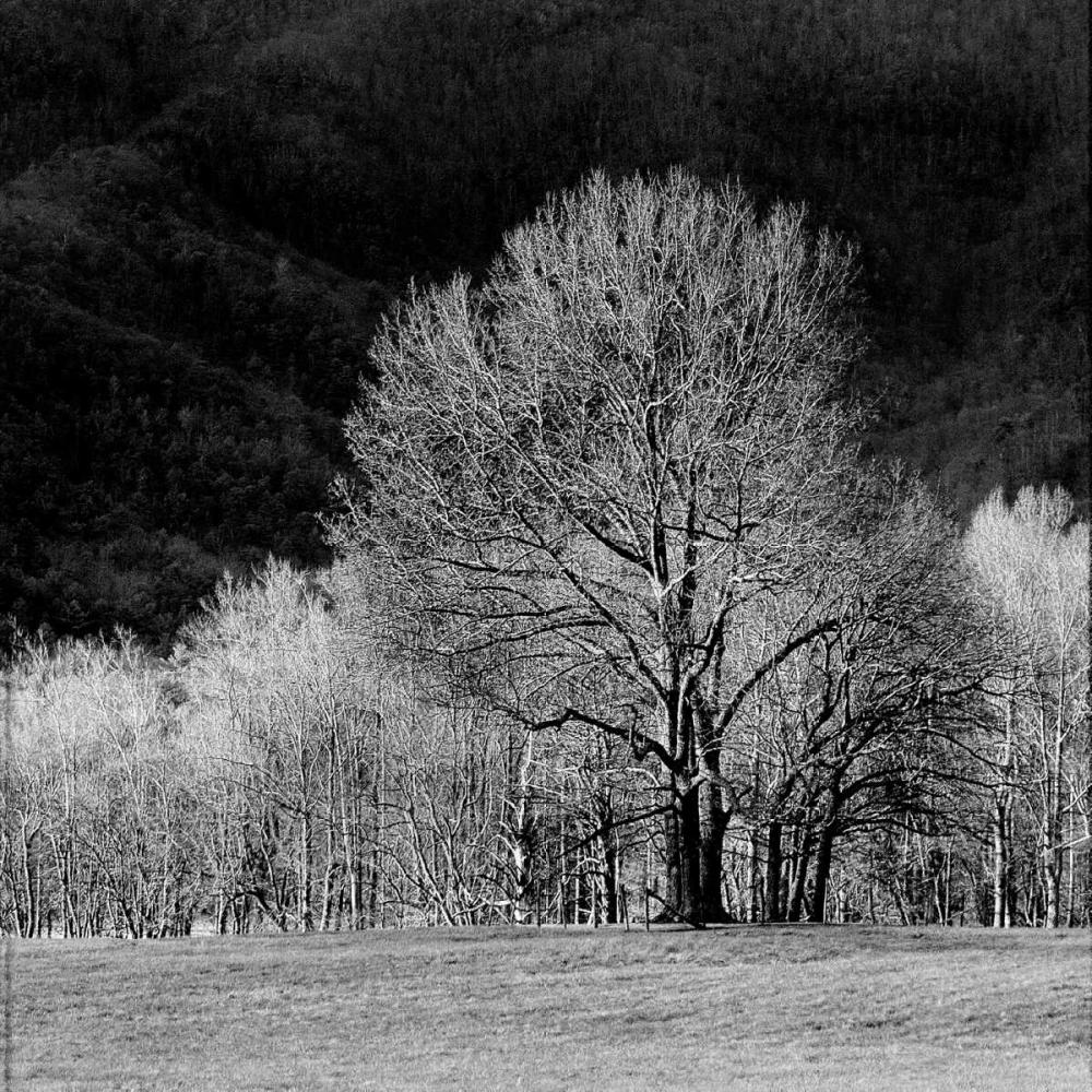 Cades Trees I