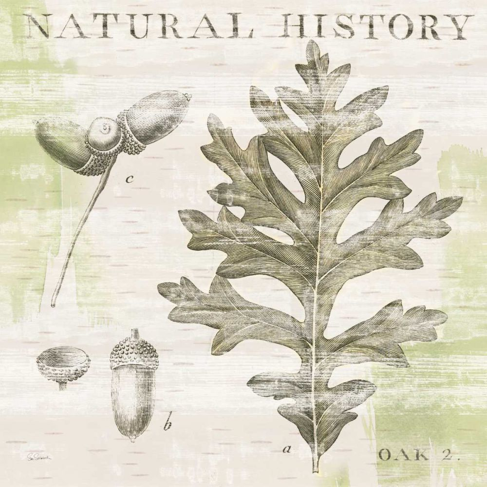 Natural History Oak II