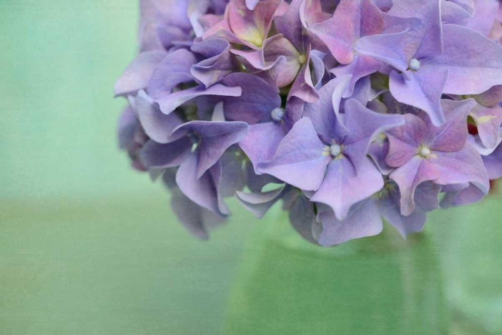 Hydrangea Still Life